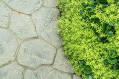 Concrete floor and green plant Stock Image