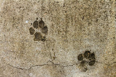 Cracked Footprint Floor Stock Photo Image 84718556