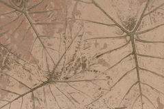 Concrete floors with designs of leaves. The Concrete floors with designs of leaves stock photos