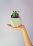 Concrete flower pots Stock Photos