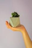 Concrete flower pots-3 Stock Photos