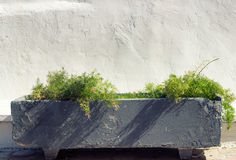 Concrete flowerpot. Against white wall stock photography
