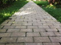 Concrete footpath arrangement in the garden. Sunshine on pathway with leaf fallen. royalty free stock image