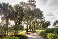 Concrete Golf Cart Path Through Palm Trees Stock Image