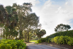 Concrete Golf Cart Path Through Palm Trees. A beautiful concrete path for golf carts through palm trees in the evening Stock Photography