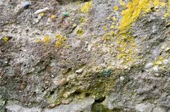 Concrete gray old stone wall texture with shards of various stones of different shapes covered with yellow moss. Background stock photos