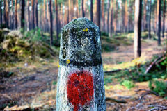 Concrete gray post with a red spot in the pine forest Stock Images