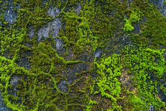 Free Concrete In Architecture, Wallpaper And Texture Moss Wall Stock Photos - 130340643