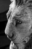 Concrete Lion. Portrait of a Concrete Lion Royalty Free Stock Images