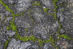 Concrete moss texture. Old concrete green moss texute gray background Stock Image