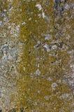 Concrete muur die met mos wordt behandeld Stock Afbeelding