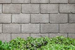 Concrete muur en decoratieve groene installatie royalty-vrije stock afbeelding