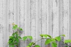 Concrete muur met klimplantinstallaties royalty-vrije stock afbeeldingen