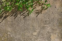 Concrete old wall with branch of tree Royalty Free Stock Image
