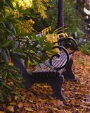 Park bench surrounded by fallen autumn leaves stock photo