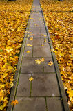 Concrete  park path through autumn leaves. Concrete pavement park path through autumn leaves Royalty Free Stock Photos