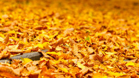 Concrete path drowning in leaves. Stock Image