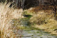 Concrete path going through grass. Concrete path going through winter grass to the forest royalty free stock photography