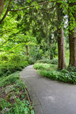 Concrete Path Through Green Forest royalty free stock images