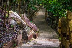 Concrete path, laid in the forest. Yalong Bay Tropic Paradise Forest Park, Hainan, China. stock photography