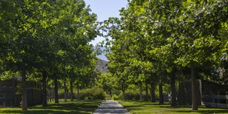 Concrete path lined with lush trees in Utah Valley. View of a path running in the middle of a grassy terrain in Utah Valley on a sunny day. The row of lush stock images