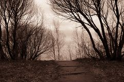 Concrete path surrounded by naked trees Royalty Free Stock Image