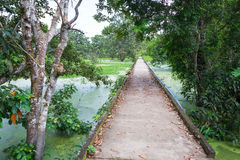 Free Concrete Path Through The Jungle Stock Images - 64846734