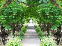 Concrete path with tropical green trees and flowers. In the public park at Thailand royalty free stock photography
