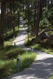 Concrete path winding through pine trees Stock Images