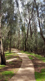 Concrete pathway in forest of ironwood trees Royalty Free Stock Photos