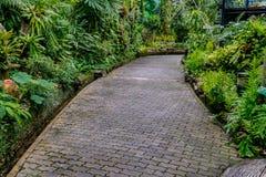 Concrete Pathway in garden Stock Photo