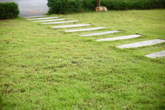 Concrete pathway pavement step on green grass. Front yard garden Stock Image