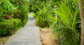Concrete pathway or walkway in jungle forest Stock Photo