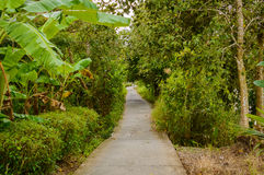 Concrete pathway or walkway in jungle forest Royalty Free Stock Image