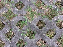 Concrete paving the green grass in holes used sidewalk. royalty free stock photos