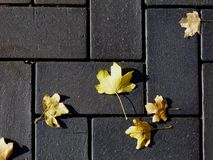 concrete paving texture in gray concrete with yellow leaves stock photos