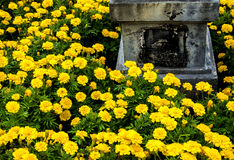 Concrete pedestal in the marigolds field Stock Photography