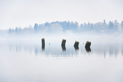 Concrete piles remaining from the pier sticking out of the water. Heavy fog Royalty Free Stock Photography