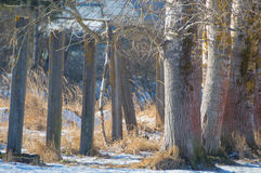 Concrete pillars moving into the trees with the snow in the winter term Royalty Free Stock Photo