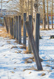 Concrete pillars and trees with snow. Meadow with the snow dug where the concrete pillars near the trees Stock Photos