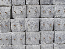 Concrete pole pile Stock Photography