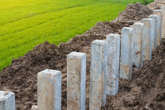 Concrete poles on soil and rice fields. Royalty Free Stock Photography