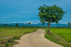 Concrete road. And natural background Stock Photography