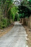 Concrete road with tropical forest Stock Photo