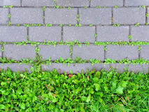 Concrete sidewalk coverage with sprouting green grass. Stock Photos