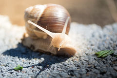 Concrete snail Stock Photos
