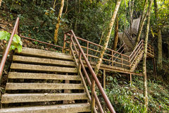 Concrete Staircase in forest Royalty Free Stock Photography