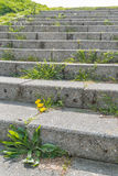 Concrete stairway with different types of weeds on the stairs Royalty Free Stock Image