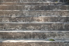 Concrete stairway with green leaf Royalty Free Stock Photo