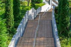 Concrete stairways with tree Stock Photo